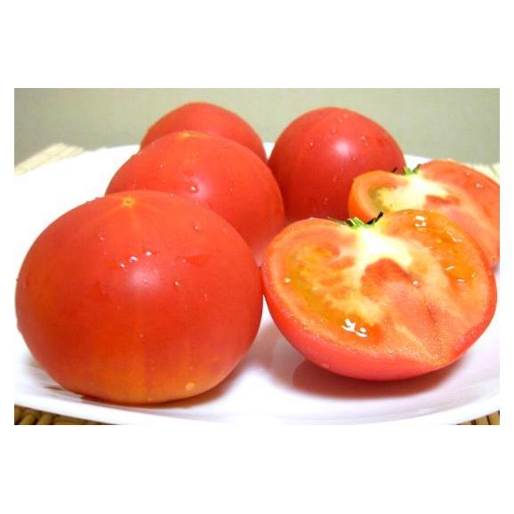 静岡・長野産 アメーラトマト 1kg03