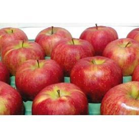 青森産 ジョナゴールドりんご 約10kg