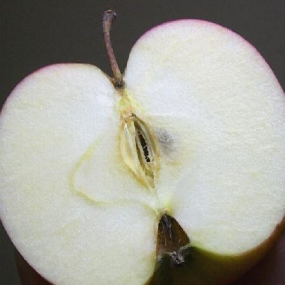 青森産 ジョナゴールドりんご 約10kg02