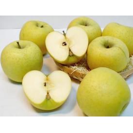 【送料無料】長野産訳あり シナノゴールドリンゴ  5kg