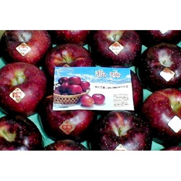 【お試し!送料無料 ※一部地域除く】秋映(あきばえ)りんご 約5kg03