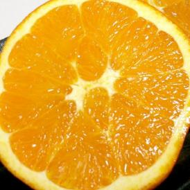 ネーブルオレンジ 16個入り