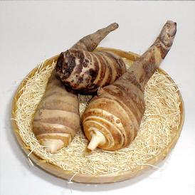 海老芋(えびいも)大サイズ 約2.5kg(5個前後入り) 京都産 【京野菜】京都伝統野菜