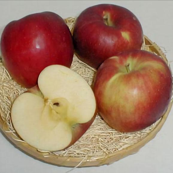 紅玉リンゴ(こうぎょくりんご) 5kg 小玉23~25個入り 青森 長野産 アップル03