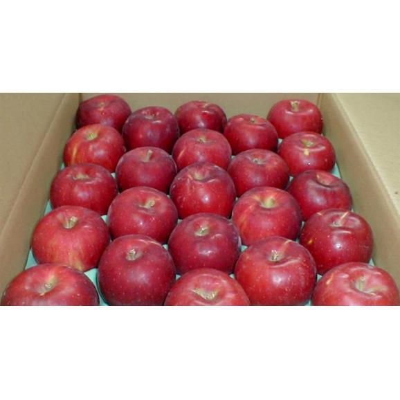 紅玉リンゴ(こうぎょくりんご) 5kg 小玉23~25個入り 青森 長野産 アップル04
