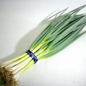 「京野菜」九条ネギ (くじょうねぎ) 12本前後入り
