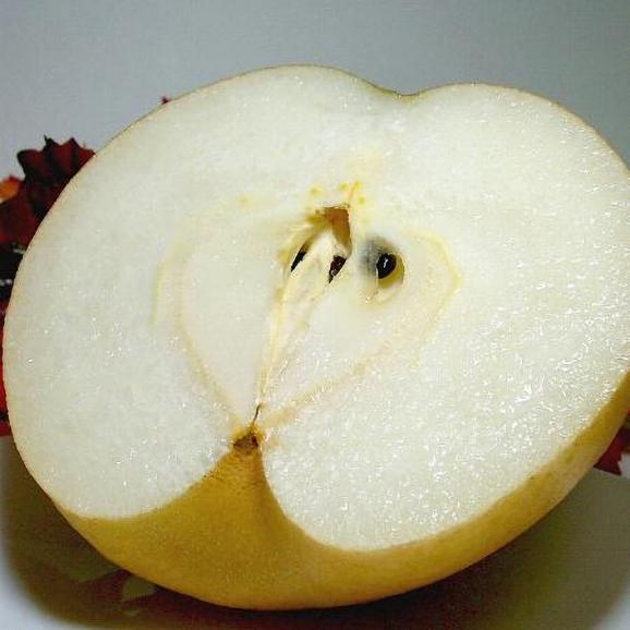新興梨(しんこうなし)約5kg 超大玉 7~8個入り 京都産 「京たんご梨」01