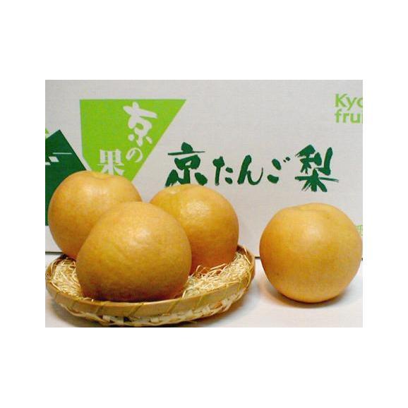 新興梨(しんこうなし)約5kg 超大玉 7~8個入り 京都産 「京たんご梨」03