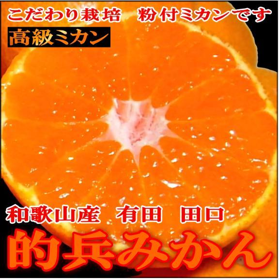 みかん 有田 田口 的兵みかん02