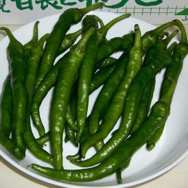 トウガラシ 伏見とうがらし(ふしみとうがらし) 約1kg 京都産「京野菜」