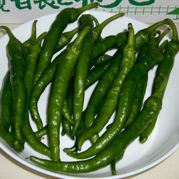 トウガラシ 伏見とうがらし(ふしみとうがらし) 約1kg 京都産「京野菜」01