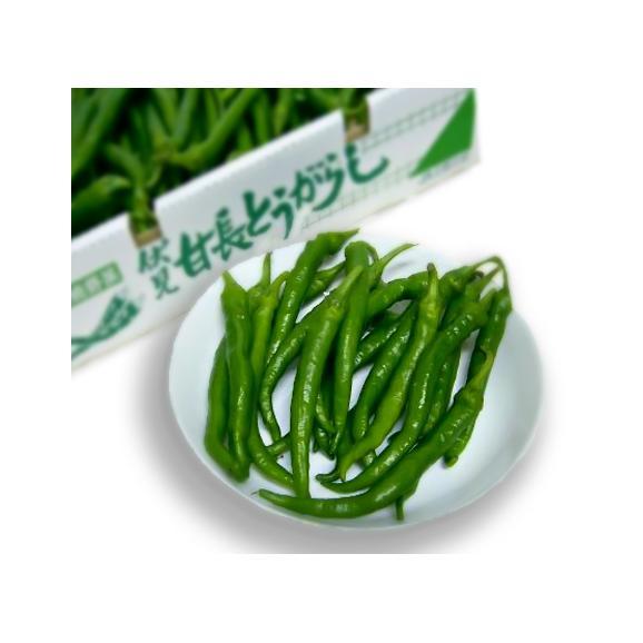 トウガラシ 伏見とうがらし(ふしみとうがらし) 約1kg 京都産「京野菜」02