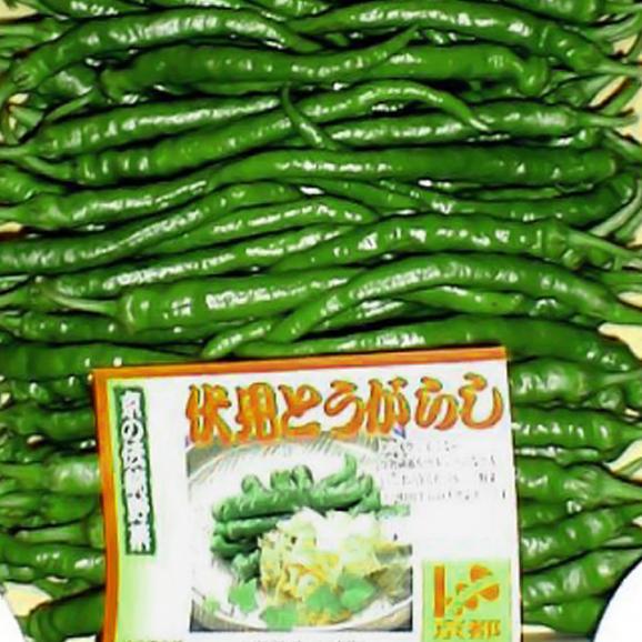 トウガラシ 伏見とうがらし(ふしみとうがらし) 約1kg 京都産「京野菜」03