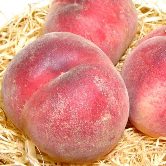 【お試し 送料無料】山梨産 加納岩果樹園の桃(かのいわかじゅえんのもも)「訳あり」約2.5kg 9~11個入り モモ *商品のお届けは6月末からとなります。02