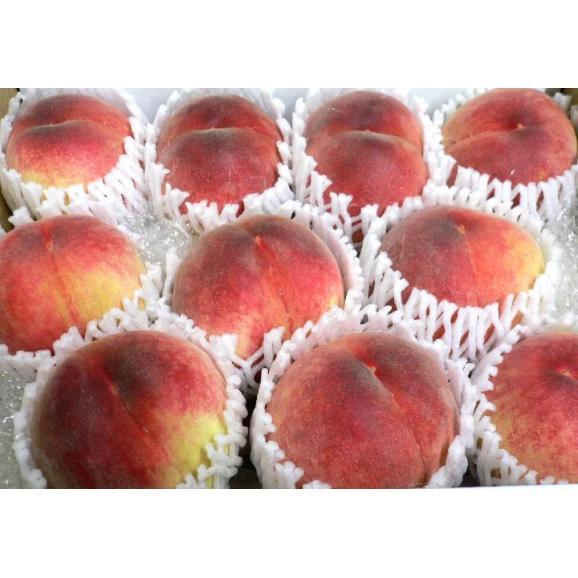 【お試し 送料無料】山梨産 加納岩果樹園の桃(かのいわかじゅえんのもも)「訳あり」約2.5kg 9~11個入り モモ *商品のお届けは6月末からとなります。05
