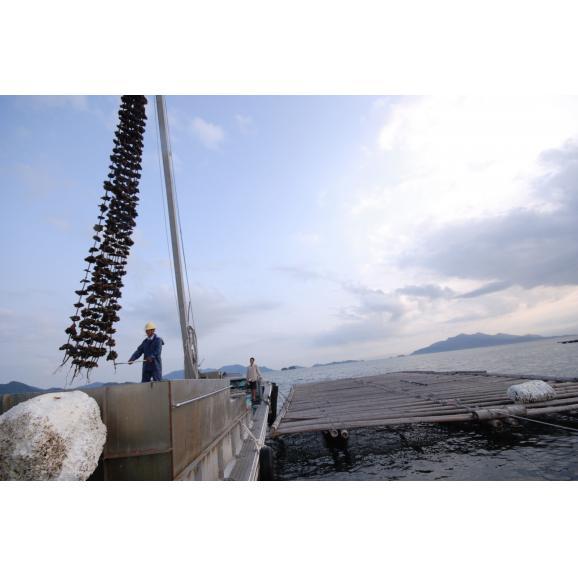 江波せんべい 海鮮しぼり焼牡蠣06