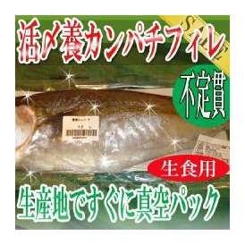 不定貫生食用 活〆養 カンパチ フィレ/冷蔵便/築地直送