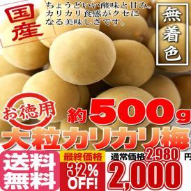 国産豊後梅100%使用。無着色☆お徳用大粒カリカリ梅500g/送料無料/常温便