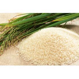 《産地直送直売》秋田県大仙市農家直送♪あきたこまち25kg(玄米か白米をお選びください。)