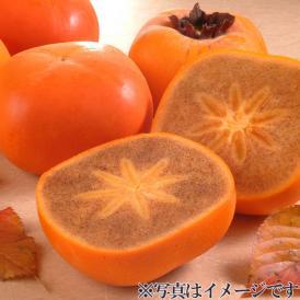 【和歌山県】紀ノ川柿 4kg
