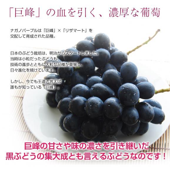 ぶどう 葡萄 送料無料 長野県産 ナガノパープル 2房(合計 約800g)常温又は冷蔵03