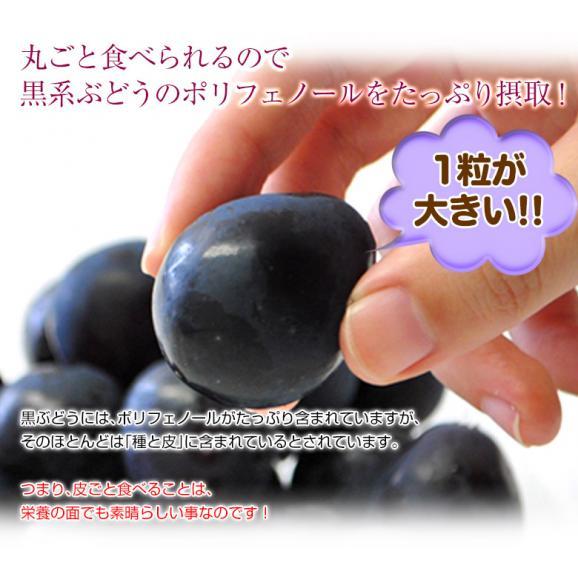 ぶどう 葡萄 送料無料 長野県産 ナガノパープル 2房(合計 約800g)常温又は冷蔵05