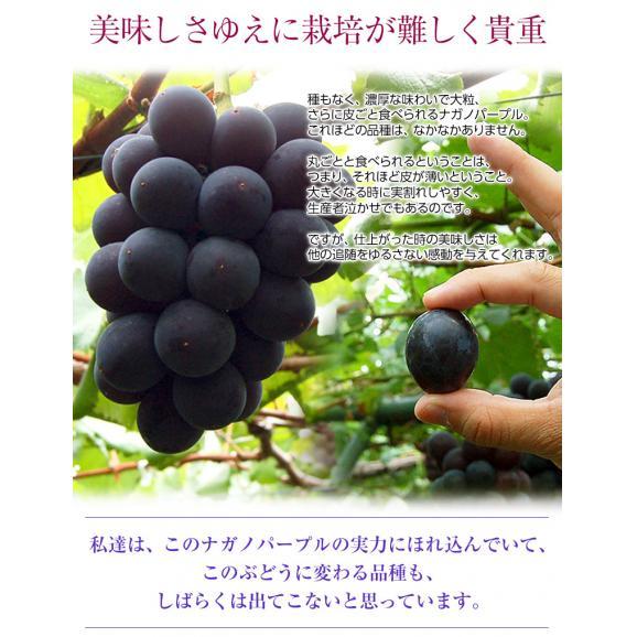 ぶどう 葡萄 送料無料 長野県産 ナガノパープル 2房(合計 約800g)常温又は冷蔵06