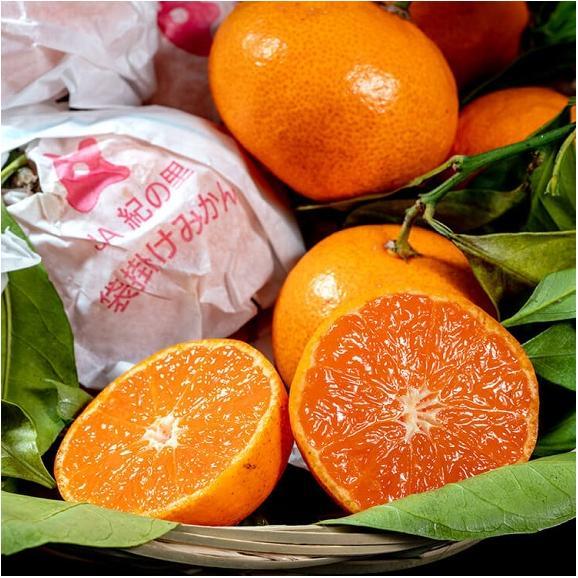 みかん ミカン 柑橘 和歌山県紀の里産 完熟 袋掛けみかん 小玉 s~2s 約3kg 常温 送料無料01