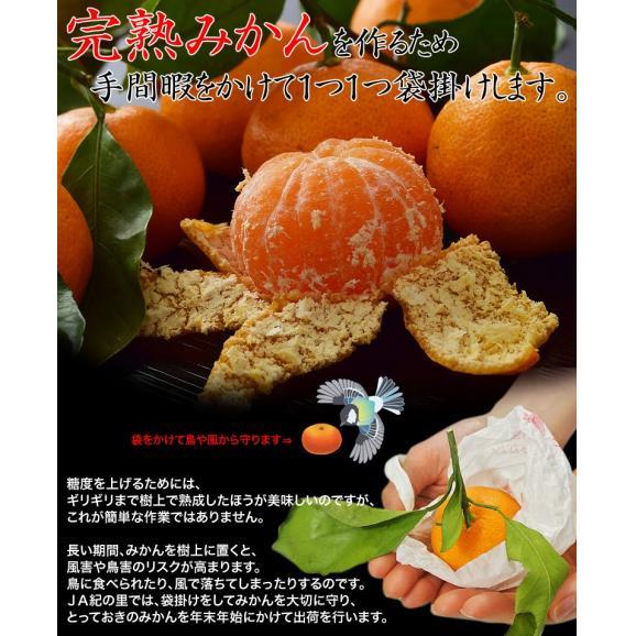 みかん ミカン 柑橘 和歌山県紀の里産 完熟 袋掛けみかん 小玉 s~2s 約3kg 常温 送料無料03