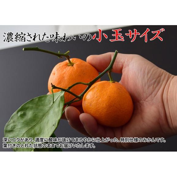 みかん ミカン 柑橘 和歌山県紀の里産 完熟 袋掛けみかん 小玉 s~2s 約3kg 常温 送料無料04
