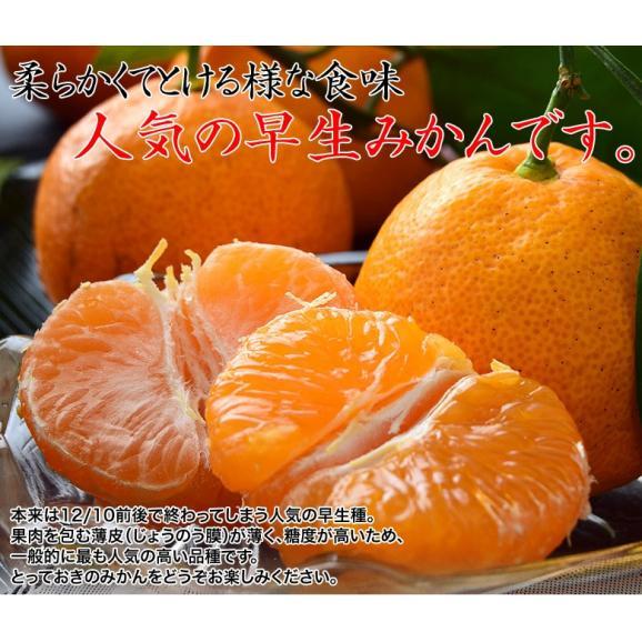 みかん ミカン 柑橘 和歌山県紀の里産 完熟 袋掛けみかん 小玉 s~2s 約3kg 常温 送料無料05