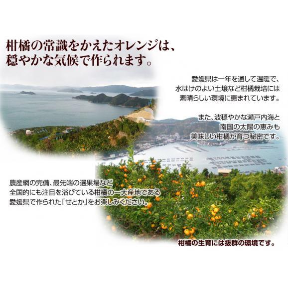 愛媛県産 ハウスせとか L~2Lサイズ(12~15玉) 約3キロ 秀品 化粧箱入 ※常温 送料無料04