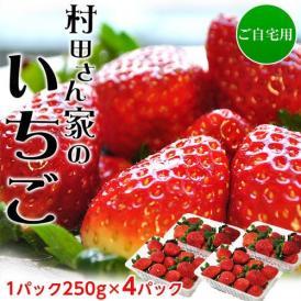 いちご イチゴ 苺 茨城県産 『村田さん家のいちご』 約250g×4パック ※冷蔵 送料無料
