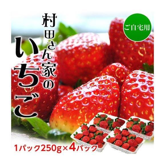 いちご イチゴ 苺 茨城県産 『村田さん家のいちご』 約250g×4パック ※冷蔵 送料無料01