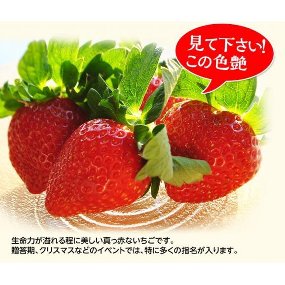 いちご イチゴ 苺 茨城県産 『村田さん家のいちご』 約250g×4パック ※冷蔵 送料無料03