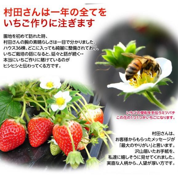 いちご イチゴ 苺 茨城県産 『村田さん家のいちご』 約250g×4パック ※冷蔵 送料無料05