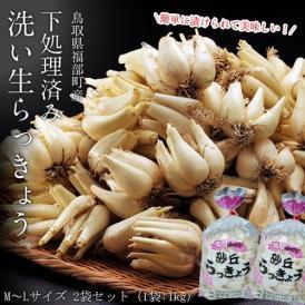 らっきょ ラッキョウ 鳥取県福部町産 下処理済み 洗い生らっきょう M-Lサイズ 2袋セット(1袋:1kg) 冷蔵