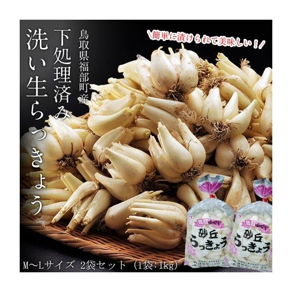 らっきょ ラッキョウ 鳥取県福部町産 下処理済み 洗い生らっきょう M-Lサイズ 2袋セット(1袋:1kg) 冷蔵01