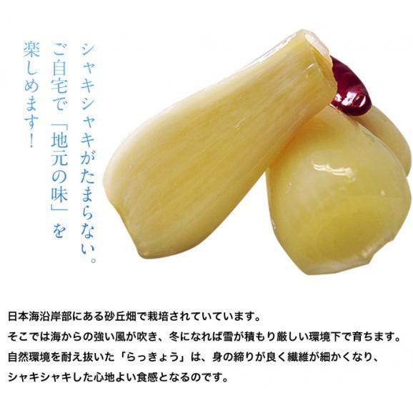 らっきょ ラッキョウ 鳥取県福部町産 下処理済み 洗い生らっきょう M-Lサイズ 2袋セット(1袋:1kg) 冷蔵02