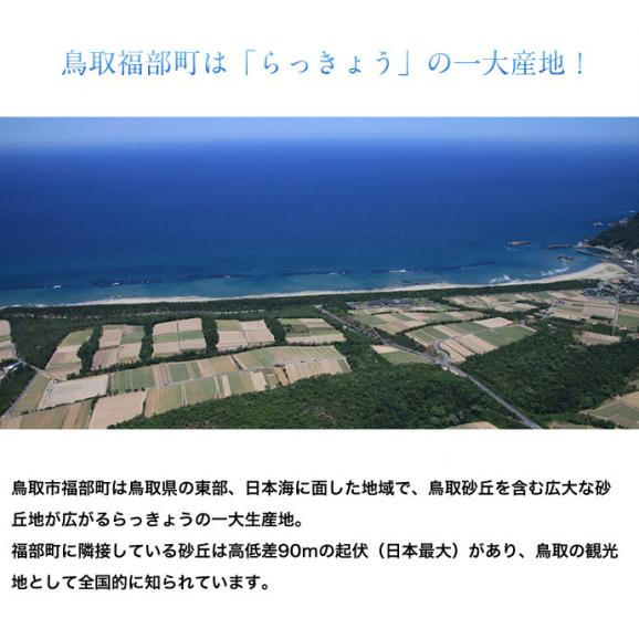 らっきょ ラッキョウ 鳥取県福部町産 下処理済み 洗い生らっきょう M-Lサイズ 2袋セット(1袋:1kg) 冷蔵03