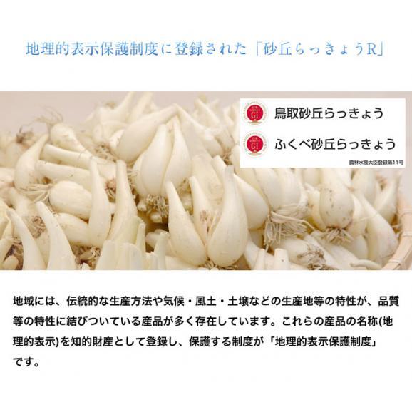 らっきょ ラッキョウ 鳥取県福部町産 下処理済み 洗い生らっきょう M-Lサイズ 2袋セット(1袋:1kg) 冷蔵06