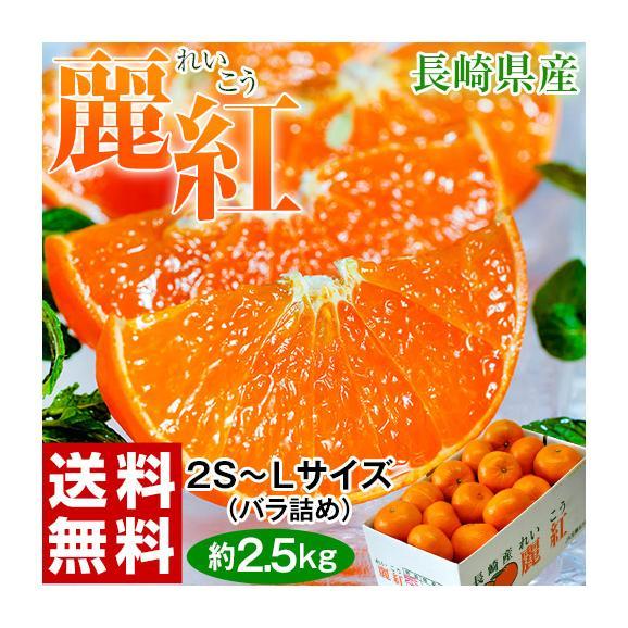 柑橘 長崎県産 JA長崎せいひ 麗紅 バラ詰 約2.5kg 2S~L (目安として15~26玉) 送料無料01