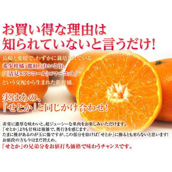 柑橘 長崎県産 JA長崎せいひ 麗紅 バラ詰 約2.5kg 2S~L (目安として15~26玉) 送料無料02