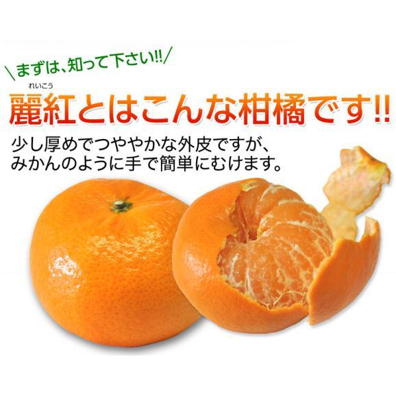 柑橘 長崎県産 JA長崎せいひ 麗紅 バラ詰 約2.5kg 2S~L (目安として15~26玉) 送料無料04