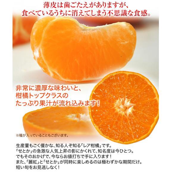 柑橘 長崎県産 JA長崎せいひ 麗紅 バラ詰 約2.5kg 2S~L (目安として15~26玉) 送料無料05