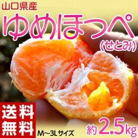 柑橘 みかん 山口県産 ゆめほっぺ M~3L 約2.5kg 送料無料