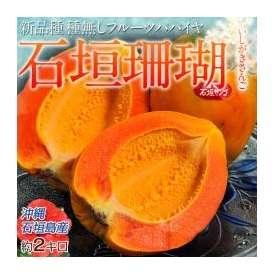 《送料無料》沖縄産 石垣珊瑚(パパイヤ) 35玉 約2キロ ○