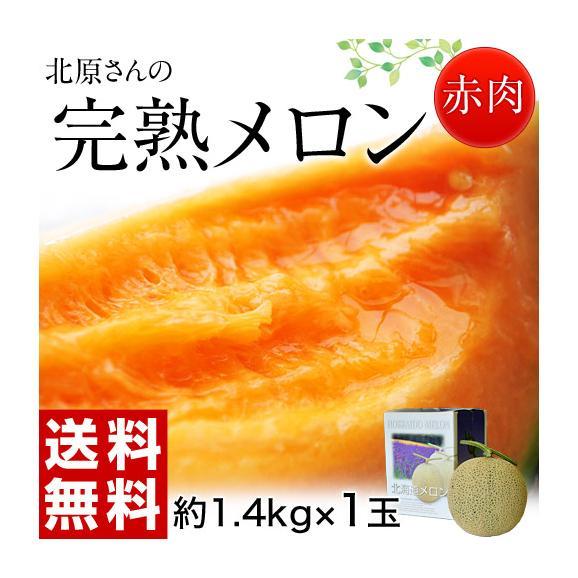 メロン めろん 北海道産 北原さんの完熟メロン 化粧箱入 1玉 約1.4kg 送料無料01