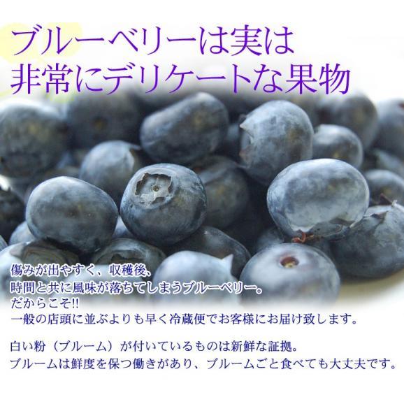 千葉県産 生 ブルーベリー 約100g×5個 送料無料 ※冷蔵03