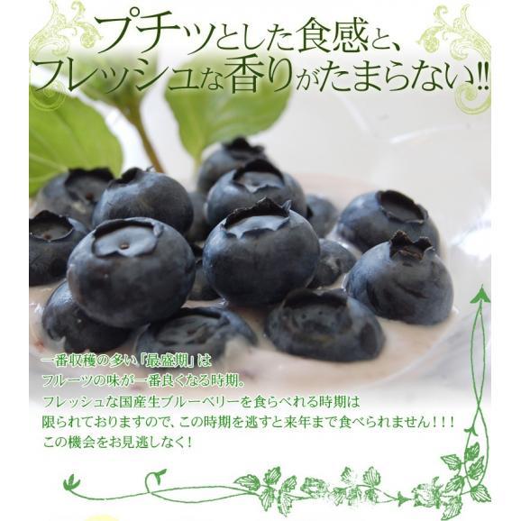 千葉県産 生 ブルーベリー 約100g×10個 送料無料 ※冷蔵02